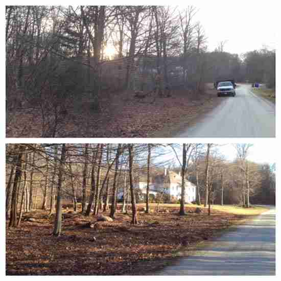 selective thinning tree removal before and after