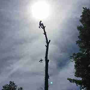The KDF difference as seen with tree climber and tree removal services.