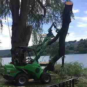 Tree services - tree removal due to storm damage
