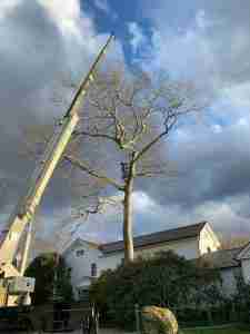 Crane being used to dismantle and remove tree
