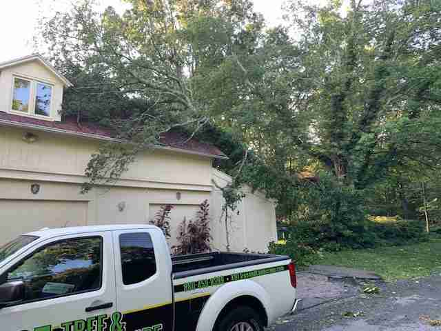 Tree fallen on roof of house