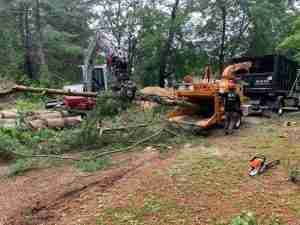 Pine tree being loaded into wood chipper.