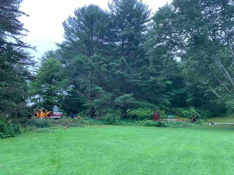 Worksite for tree removal