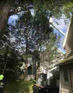 Large tree removal with crane next to house