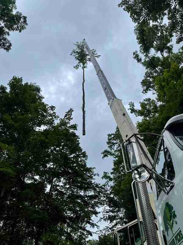 Crane picking up entire locust tree