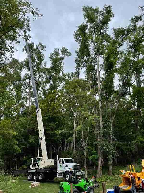 Setting up crane to remove locust trees